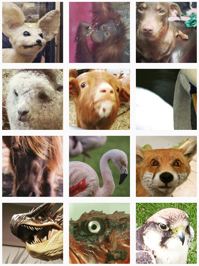 Boring instagram: Animals looking at you